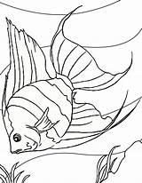 Coloring Angelfish Dibujos Peces Pintar Drawing Colorear Oceano Resultado Beta Imagen sketch template