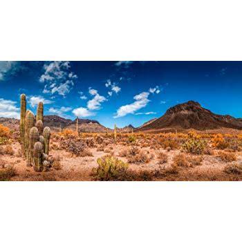 Desert Terrarium Background Desert Cactus Aquarium Or Terrarium
