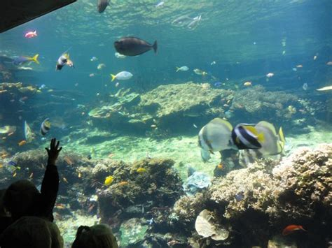 aquarium picture of nausicaa centre national de la mer boulogne sur mer tripadvisor