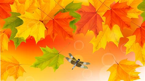 hd fall colours wallpapers  images