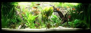 Aquarium Einrichten Beispiele : mein traum wurde wahr 450l becken seite 20 aquarium forum ~ Frokenaadalensverden.com Haus und Dekorationen