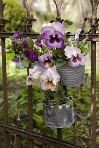 Fleur D Hiver Pour Jardinière : fleurs d hiver pour balcon pivoine etc ~ Dailycaller-alerts.com Idées de Décoration