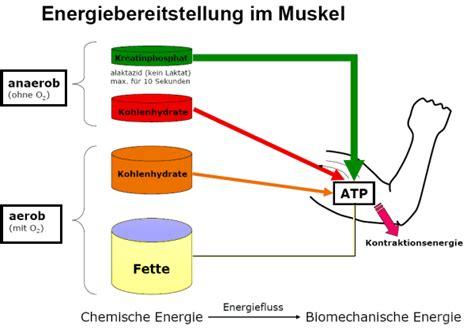 stoffwechsel energiebereitstellung