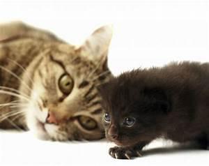 Welche Katzenrasse Passt Zu Mir : welche katze passt zu mir geliebte katze magazin ~ Lizthompson.info Haus und Dekorationen
