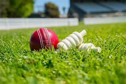 Cricket Money