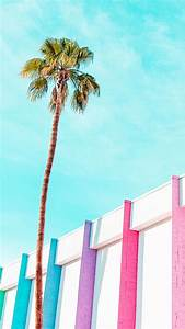 198 best images about palm trees on pinterest for Spoing springs to life on iphone