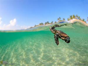 Cute Sea Turtle wallpaper | 1600x1200 | #6480
