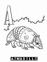 Coloring Printable Armadillo Alphabet Template Harpsichord Letter Popular sketch template