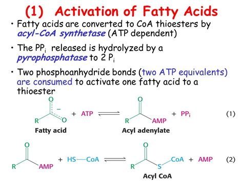 Oxidation And Biosynthesis Of Fatty Acids