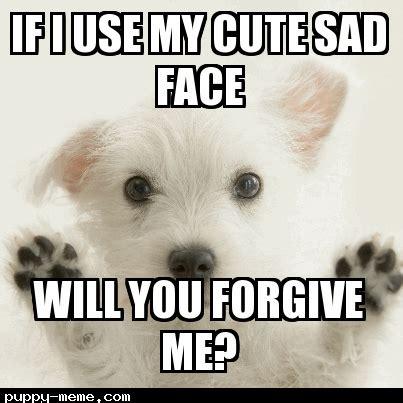 Cute Puppy Memes Sorry