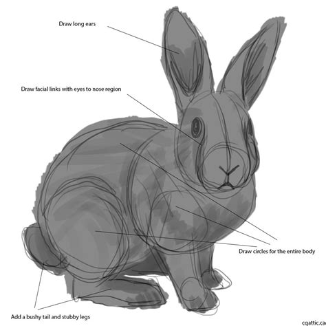 Rabbit Drawing How To Draw A Rabbit In 4 Steps With Photoshop Learn To