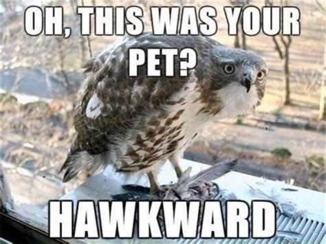 Animal Pun Memes - most funny animal memes and humor pics quotes and humor