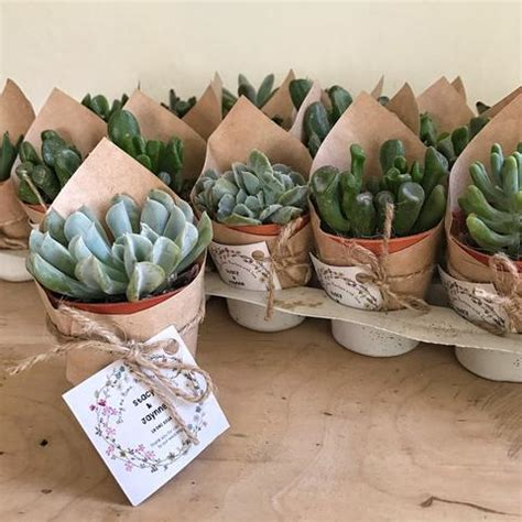 wedding favour succulents the green capsule