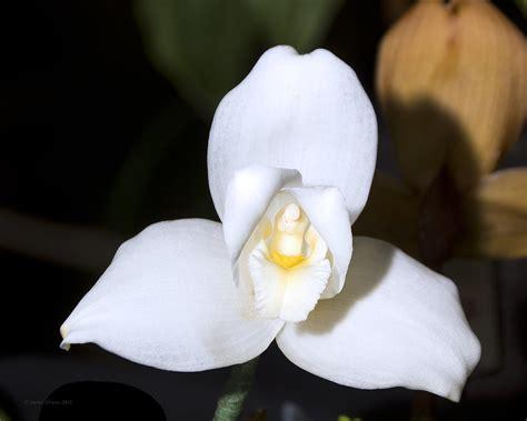 libro orquideas descargar gratis pdf