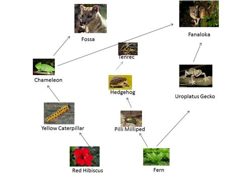 web cuisine gecko food chain images search