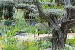 Quand Planter Lavande Dans Jardin : que planter sous un olivier d tente jardin ~ Dode.kayakingforconservation.com Idées de Décoration