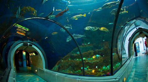 d 233 couvrez l aquarium du qu 233 bec en un clin d oeil