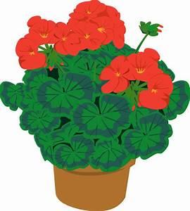 Geranium In Pot Clip Art at Clker.com - vector clip art ...