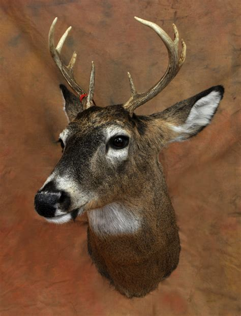 tietz taxidermy  wildlife art lebanon wi