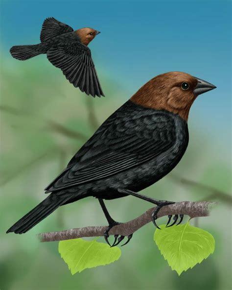 Identify Backyard Birds by 37 Best Birds Seen At Home Images On Bird