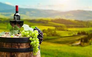 Wine Tasting Tour - Visit Wines Routes & Museums ...