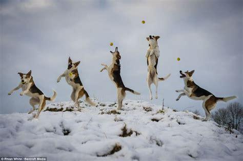 jumping  joy hilarious freeze frame photographs