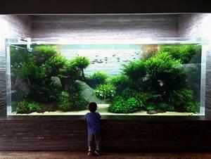 Free Aquarium Plants - WoodWorking Projects & Plans