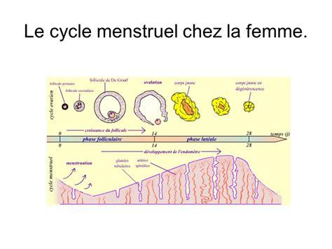 cycle menstruel comment le calculer pour ensuite