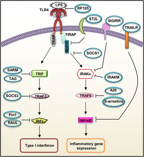 Toll Like Receptors Promising Therapeutic Targets For