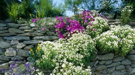 pflanzen für steinmauer ruinenmauer dekorativer sichtschutz mit charme