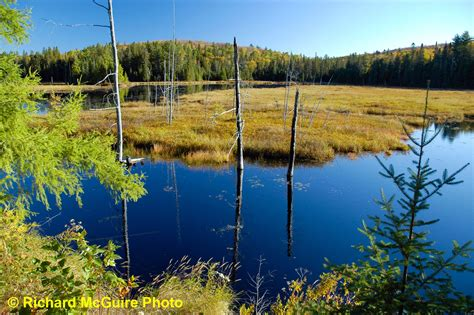 wilderness canadian ontario canada algonquin lake rich park