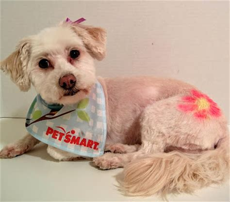 how much is a haircut at petsmart dogs us and we them unleash a fresh look