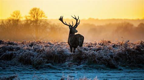 Deer Hunting Backgrounds ·① Wallpapertag