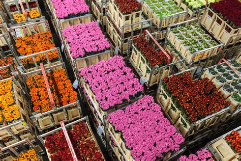 vacatures de kwakel aalsmeer verkoop bloemen groothandel in bloemen en planten parfum flower company