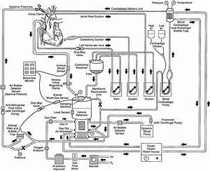 Heart Lung Machine Diagram