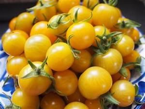 Tomaten Blätter Gelb : neues von der insel gelbe tomaten ~ Frokenaadalensverden.com Haus und Dekorationen