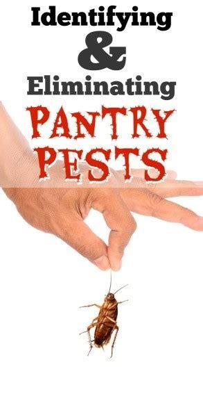 identifying  eliminating pantry pests thriftyfun