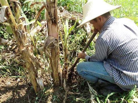 ในประเทศ - รักษ์เกษตร : วิธีการขยายพันธุ์พืช