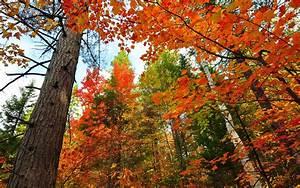 Ahorn Rote Blätter : wald b ume stamm rote bl tter ahorn herbst 1920x1200 hd hintergrundbilder hd bild ~ Eleganceandgraceweddings.com Haus und Dekorationen