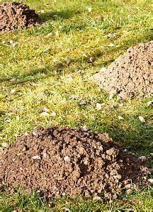 Was Tun Mit Pflanzen Im Urlaub : 355 best images about garten und pflanzen on pinterest manche urban gardening and top five ~ Markanthonyermac.com Haus und Dekorationen
