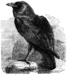 Image result for images the raven poe