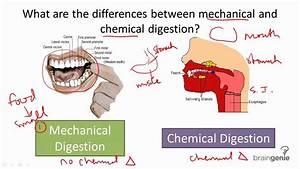 8 5 3 Mechanical V Chemical Digestion