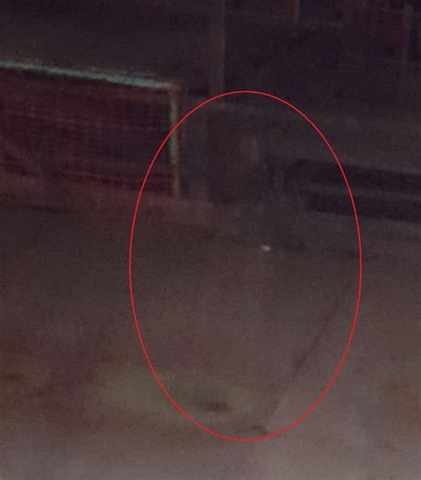ghost caught  camera   worlds  genuine snap
