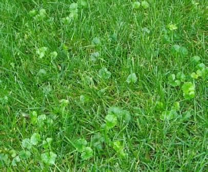 How Late Can You Kill Lawn Weeds In Fall?  Tips And