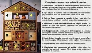 Fabriquer Un Hotel A Insecte : construction d 39 un h tel insectes une alternative ~ Melissatoandfro.com Idées de Décoration