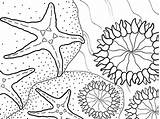 Coloring Sea Anemone Aquarium Pages Star Bay Monterey Animals Printable Colouring Starfish Designlooter Seastar Visit Getcolorings 450px 51kb sketch template