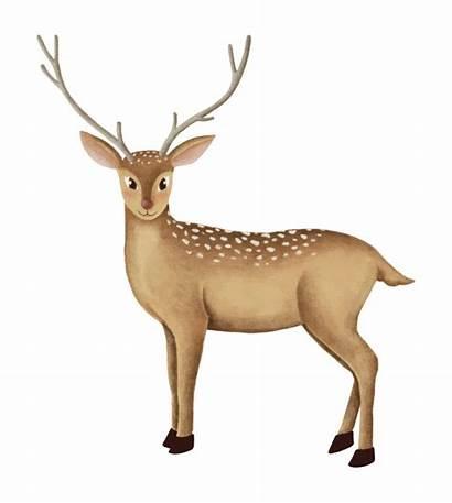 Deer Fallow Vector Vectors Freepik Graphic Drawn