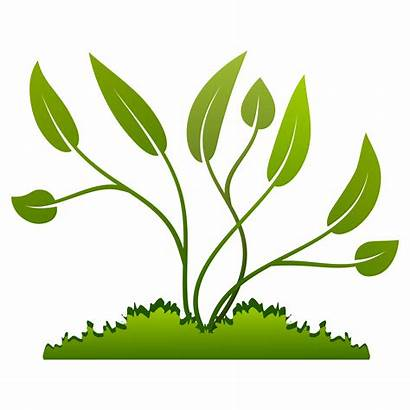 Plants Growing Clipart Vector Ground Plant Grow