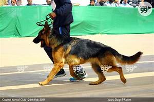 Capital kennel club dog show delhi 2017 151 dog shows for Show me dog kennels