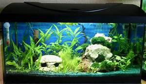 Aquarium Bodengrund Berechnen : aquarium bodengrund aufbau zuhause image idee ~ Themetempest.com Abrechnung